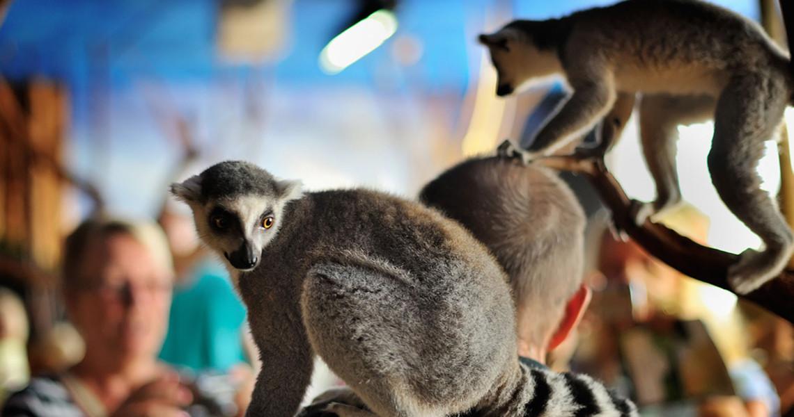 dansk rør skandinavisk dyrepark rabat